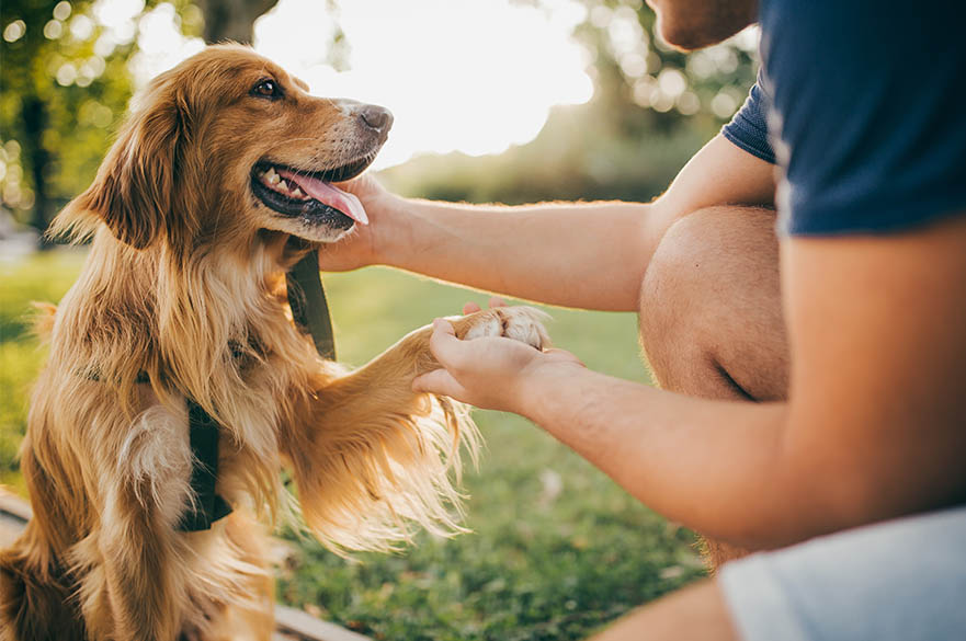 Benefits Of Pets During The COVID-19 Pandemic