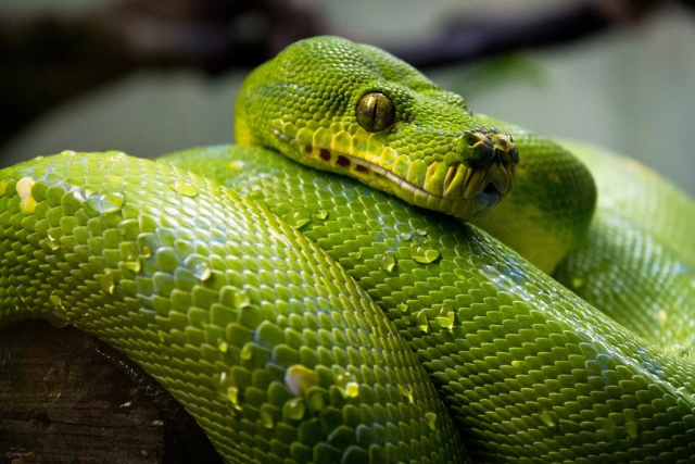 The Meaning of Dreaming About Snakes