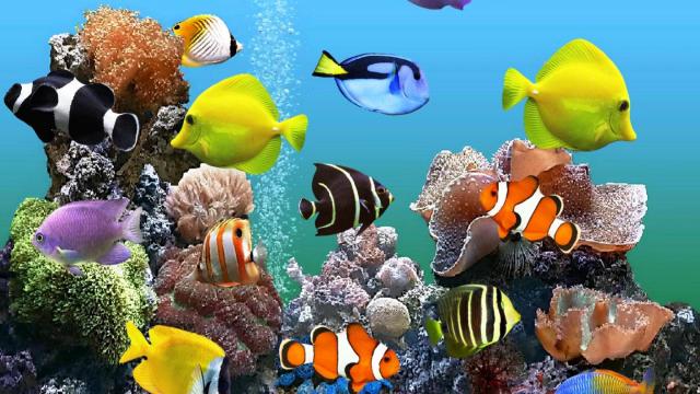 Reviews 8 Best Aquarium Power Filter